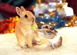 ウサギ・フェレットなどの小動物