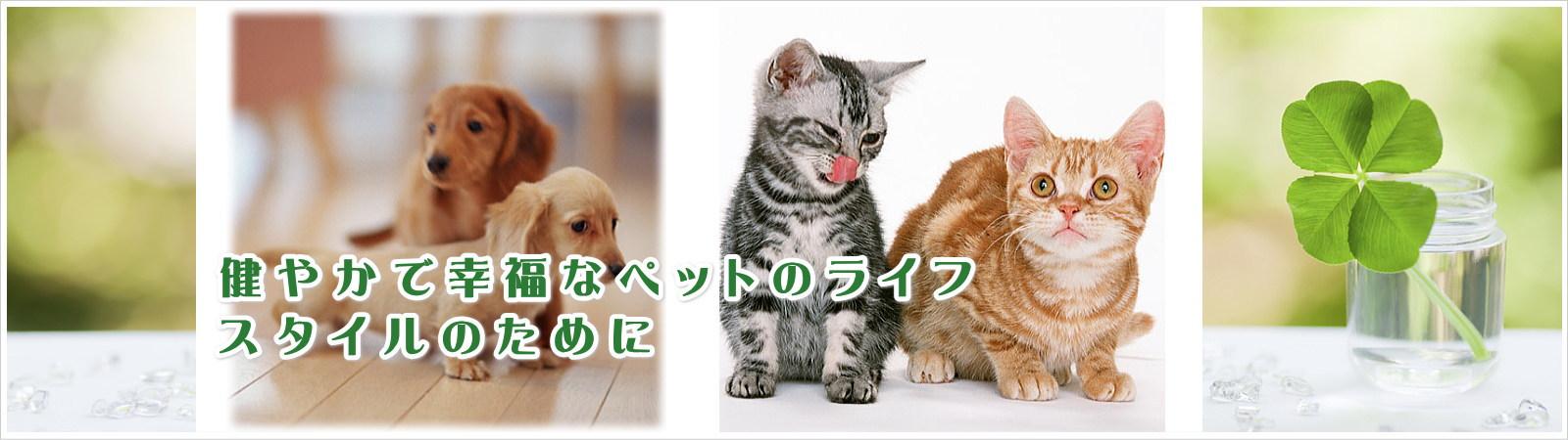 クローバー動物病院|三重県松阪市